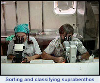 Ecomarg: Sorting and classifying suprabenthos