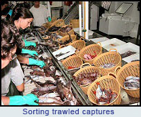 Ecomarg: Sorting trawled captures